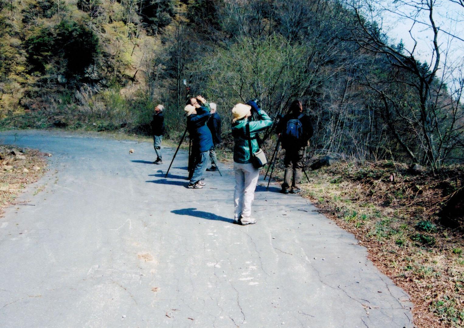 Birding in Japan
