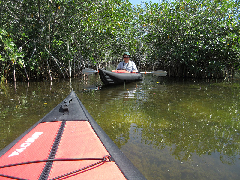 Hector on Nine Mile Pond canoe trail in Everglades NP