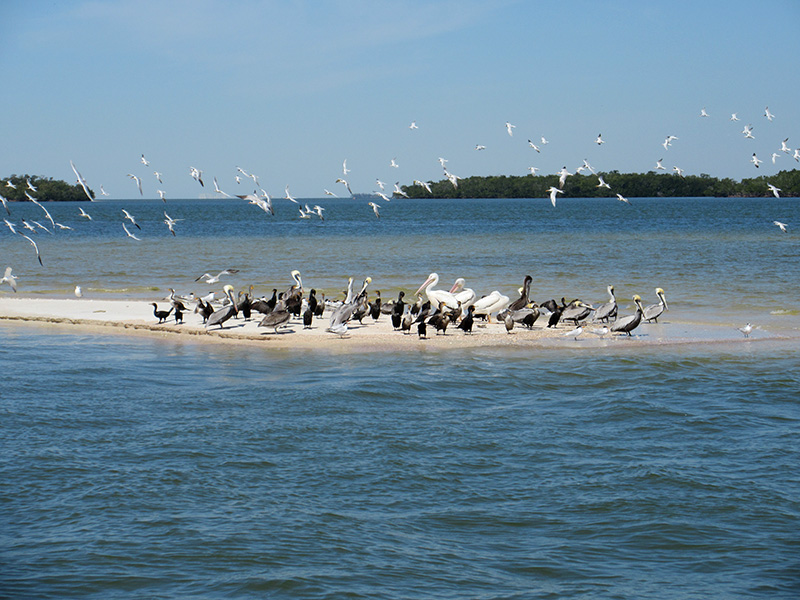 Birds on one of Everglades National Park's Ten Thousand Islands