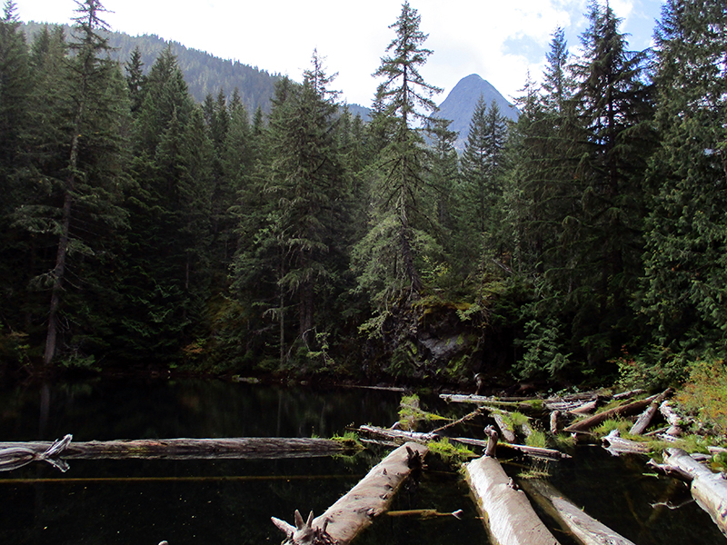 Floating logs with vegetation on North Cascades' Pyramid Lake
