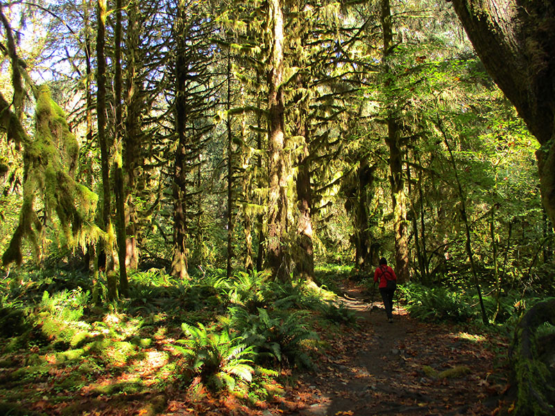 Christi in Olympic National Park's Hoh Rain Forest
