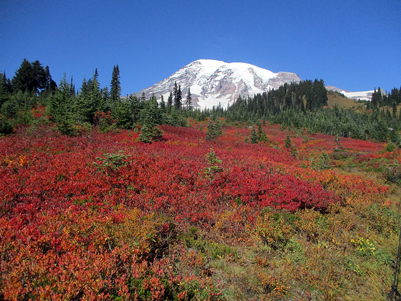 Mount Rainier in the fall