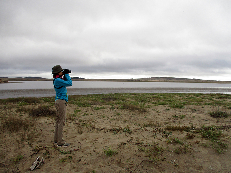 Christi birding at Point Reyes National Seashore