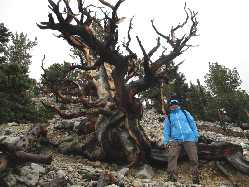 Hector near bristlecone pine in Great Basin National Park