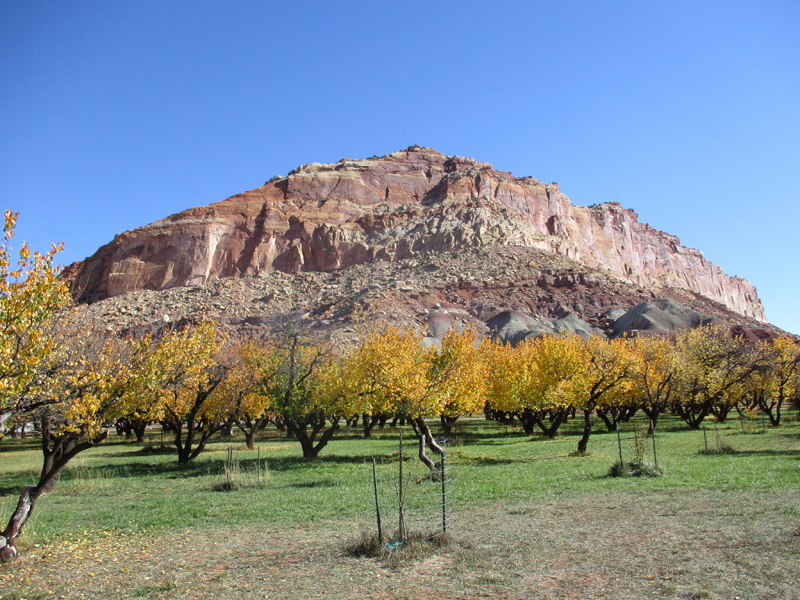 Fruit orchards in Capitol Reef National Park