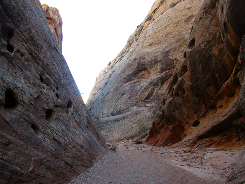 Capitol Gorge Trail in Capitol Reef National Park