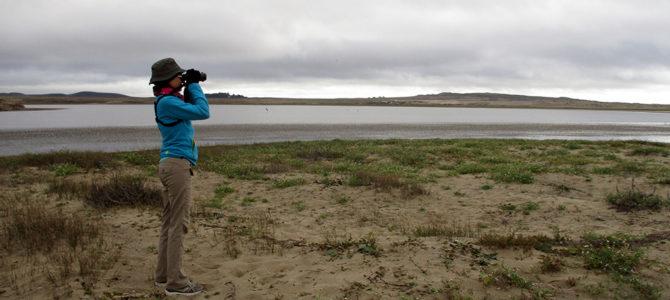 Point Reyes – A Birder's Delight