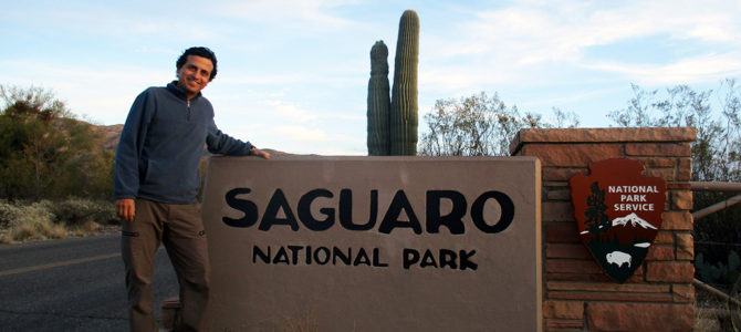 Hello, Saguaro, My Old Friend