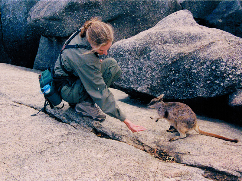 Christi feeding a Mareeba rock wallaby