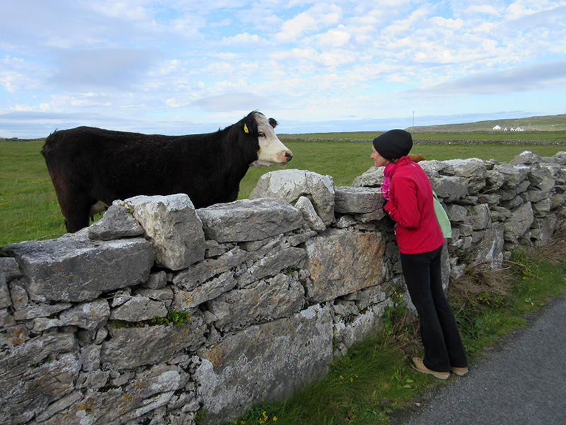 Christi communing with a cow on Inishmore