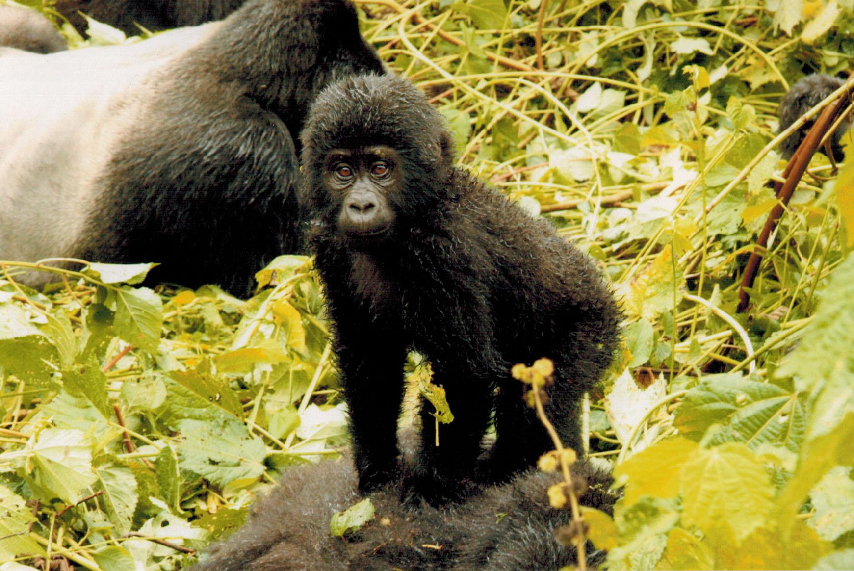 Uganda – Bwindi Impenetrable Forest