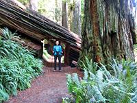 Christi in Redwood National Park